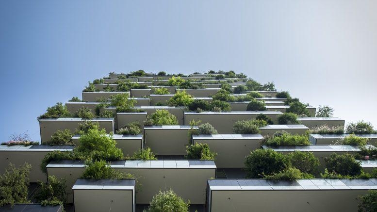 plante balcon, plante terrasse